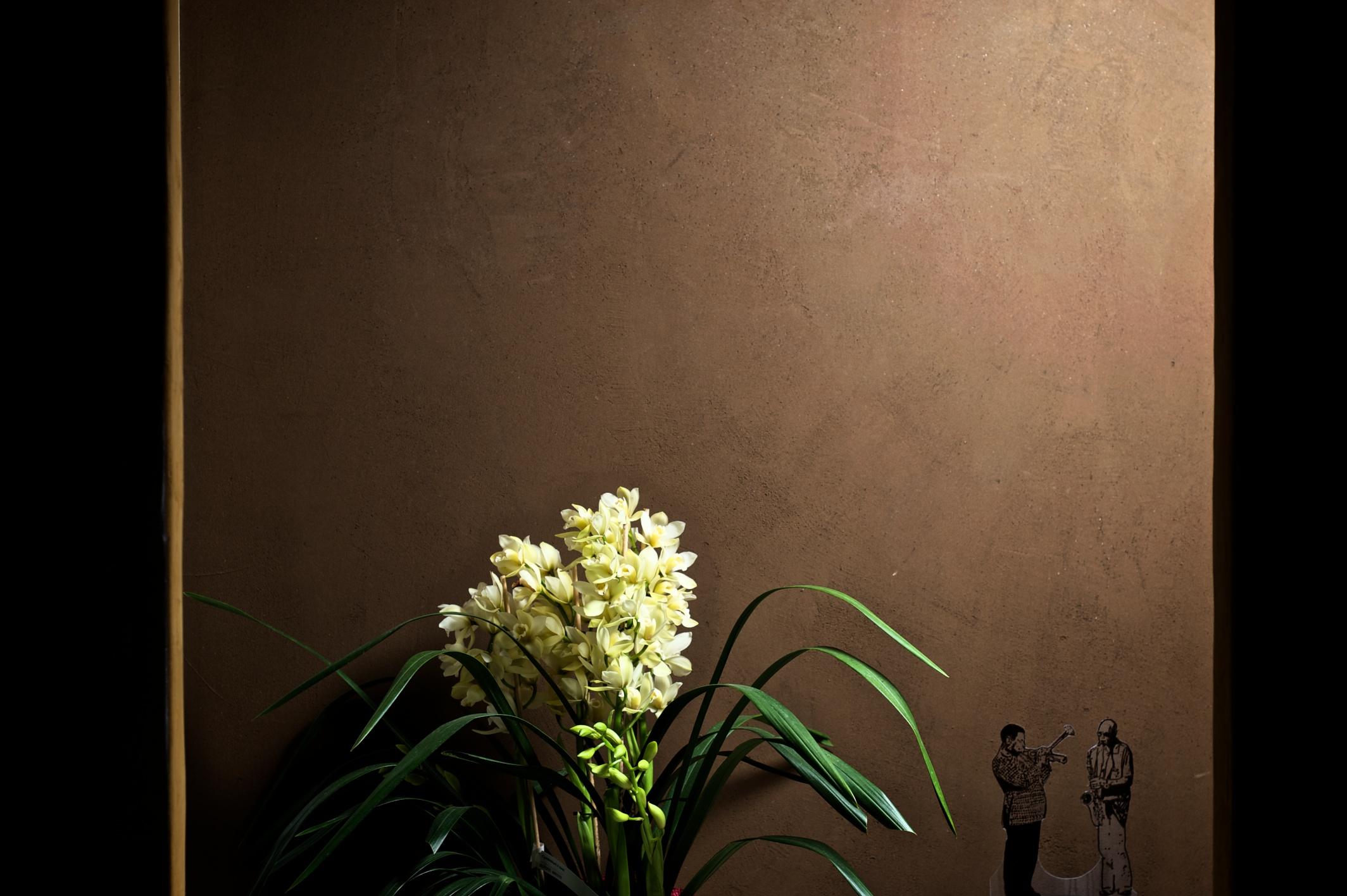 Forum colore parete soggiorno consigli for Parete soggiorno marrone